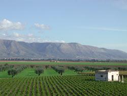 Vista del paesaggio agrario del nostro territorio